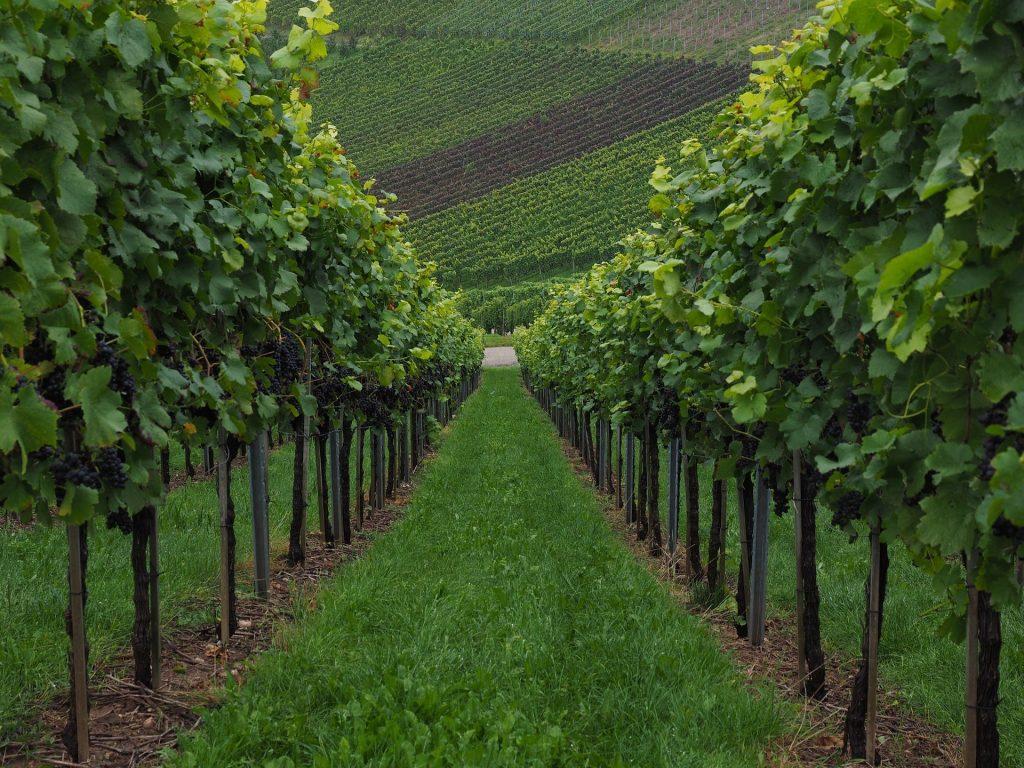 azienda vitivinicola_Industry 40